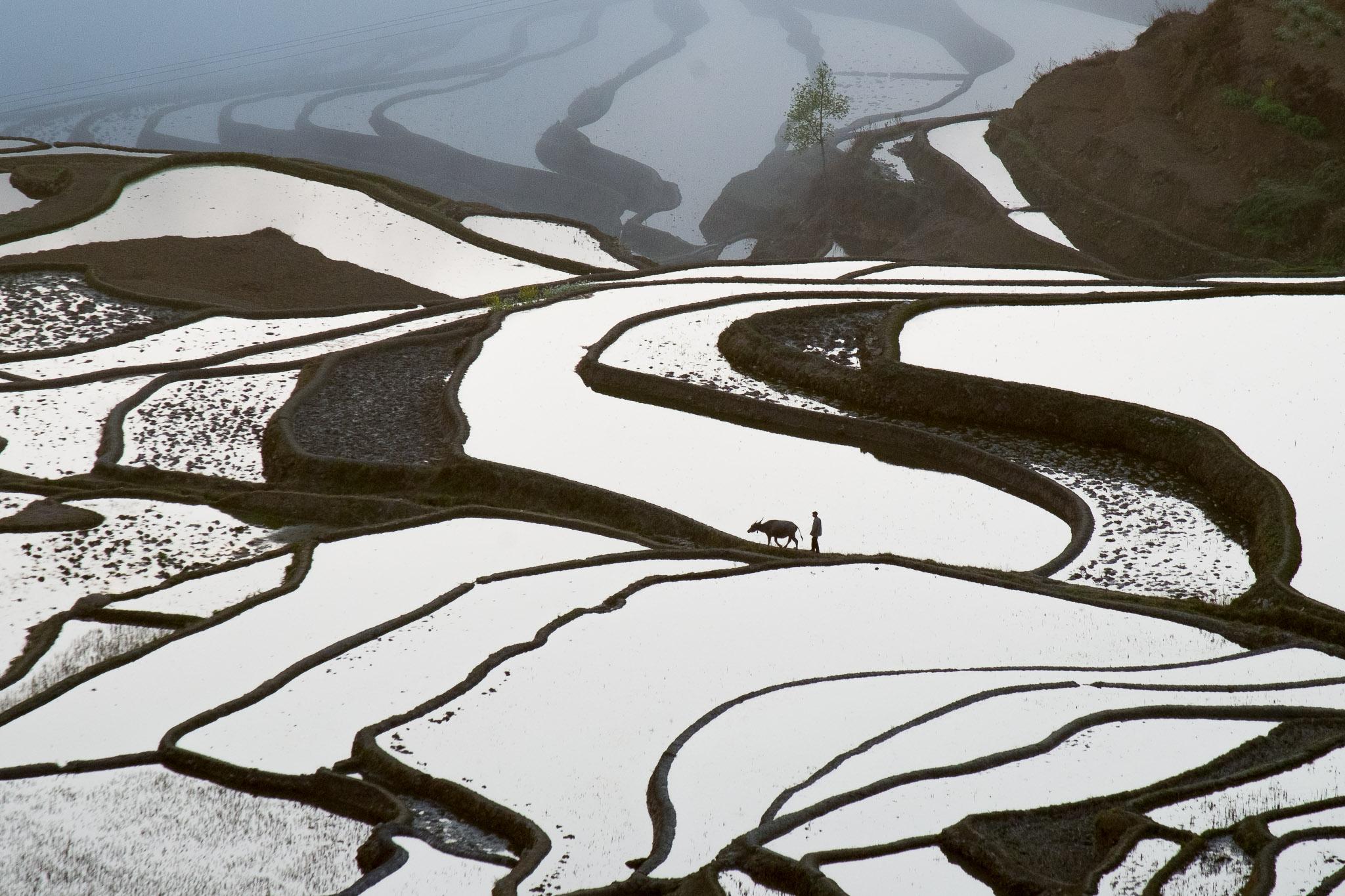 20140225_rice-terrace-1_2879.jpg
