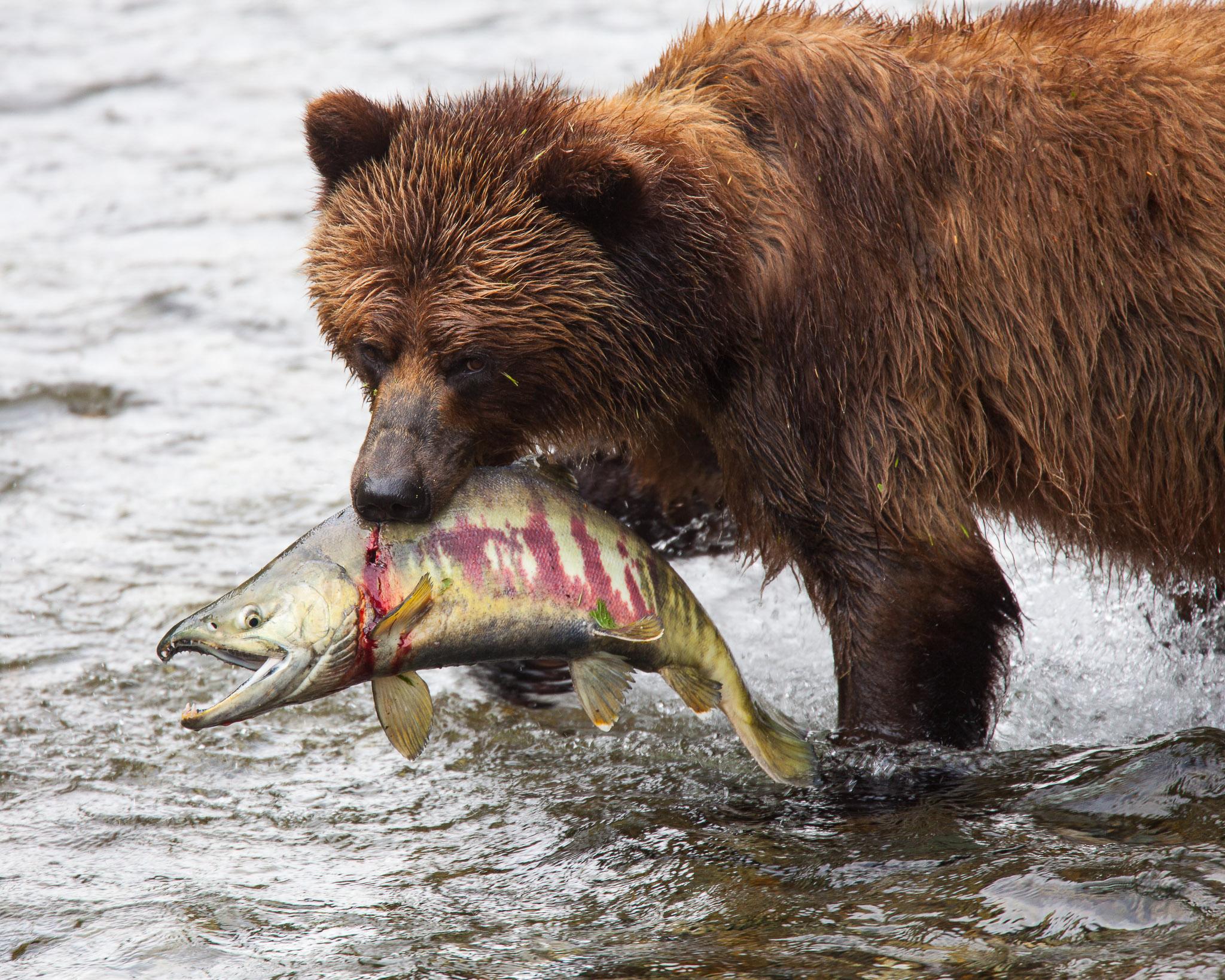20090722_grizzlybear_3519.jpg