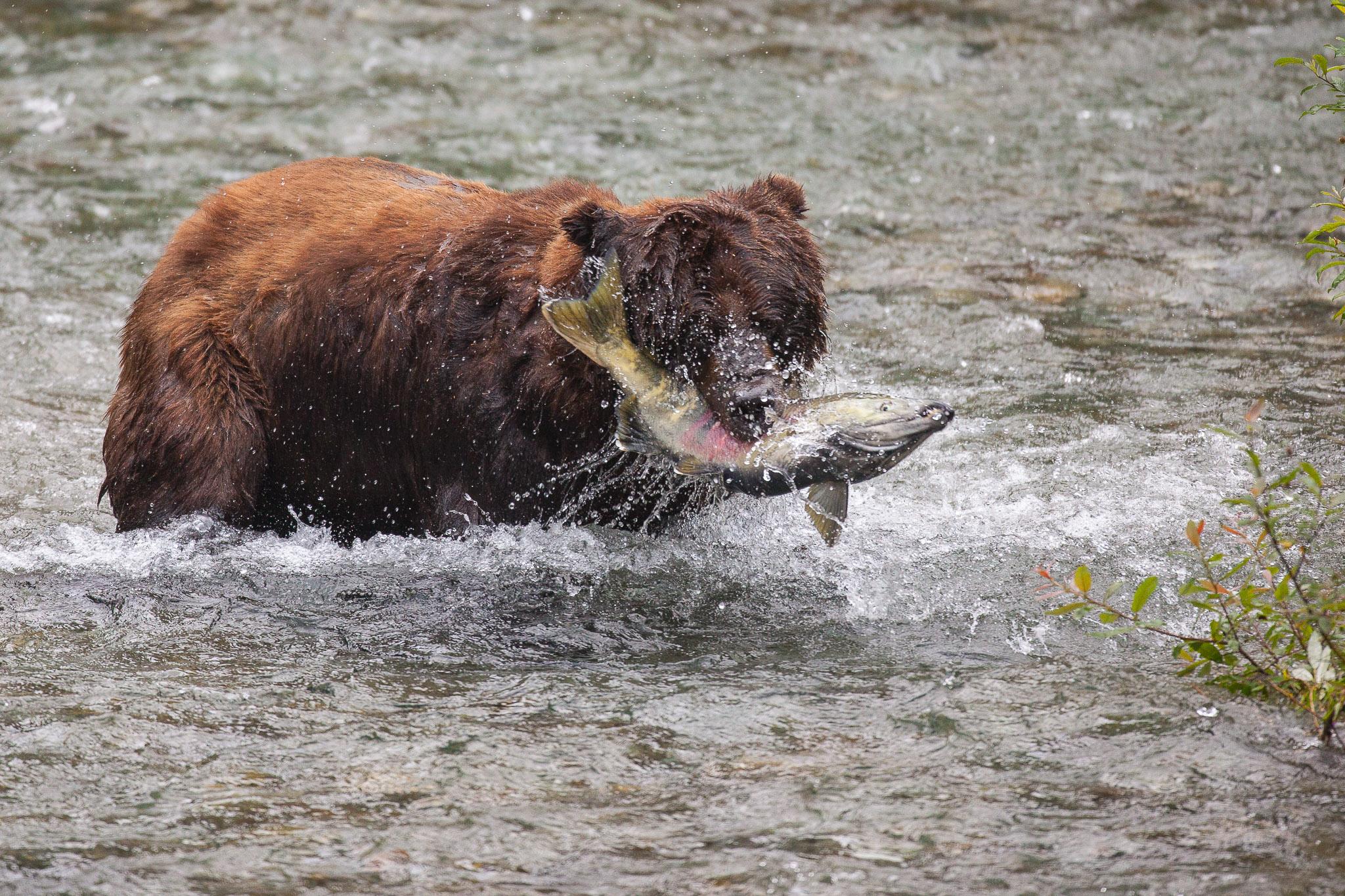 20090802_grizzlybear_89.jpg