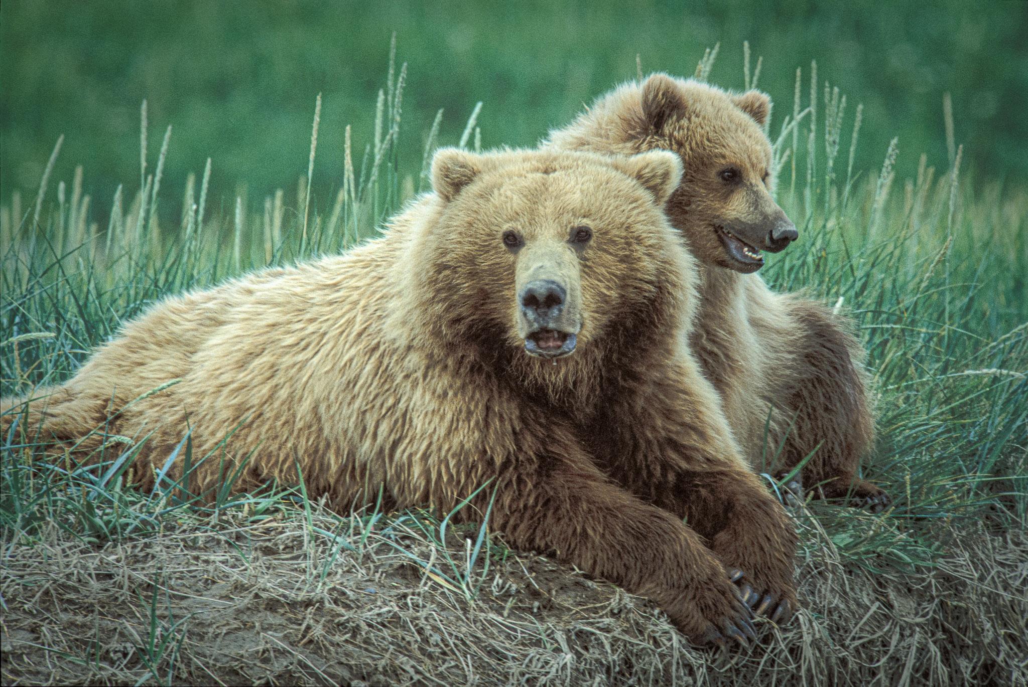 20100113_grizzlybear_010.jpg