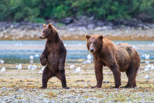 20100814_Brown_Bear_7018.jpg