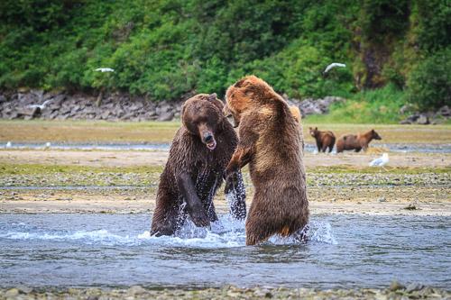 20100814_Brown_Bear_7057.jpg